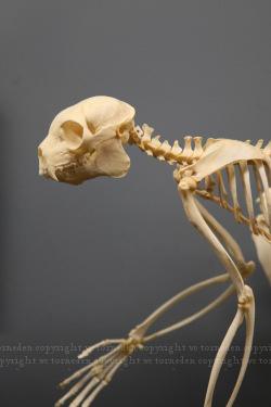 boneorpost11