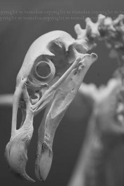 boneorpost8