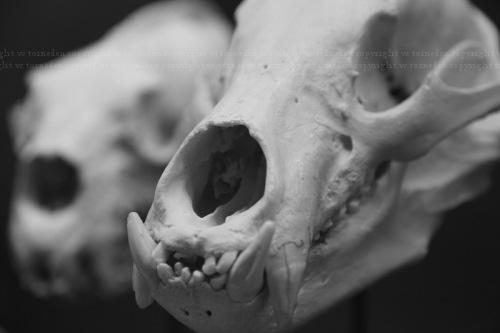boneorpost9