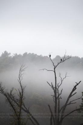 fog3post